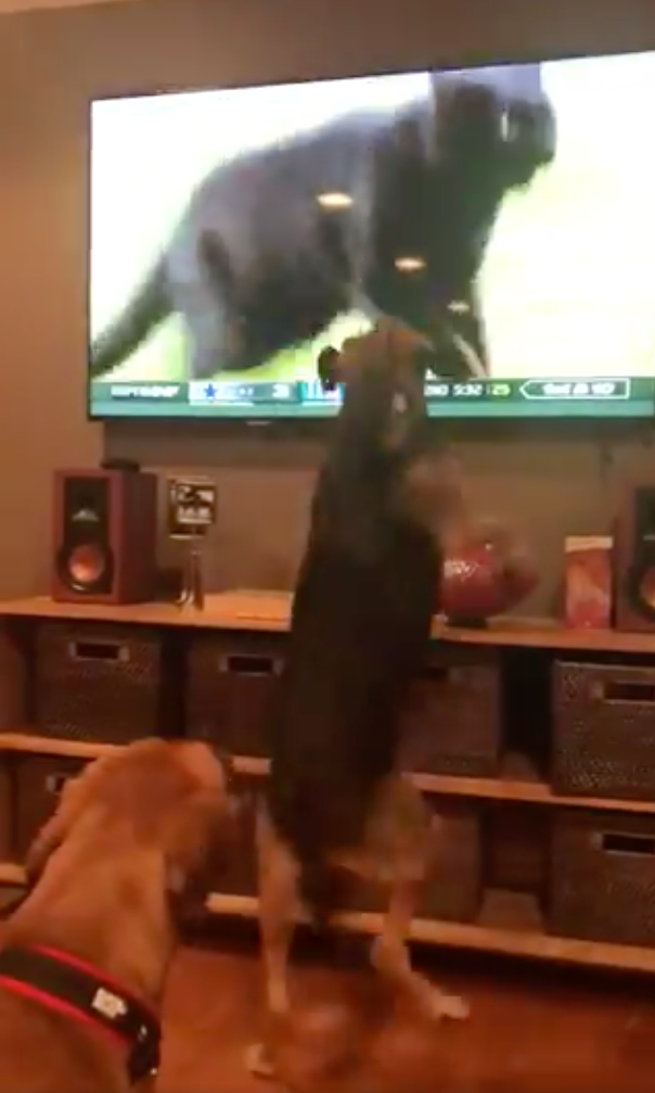 Dogs Barking At The Monday Night Football Cat Is The Wholesome Content The Internet Was Built For This Is The Loop Golf Digest